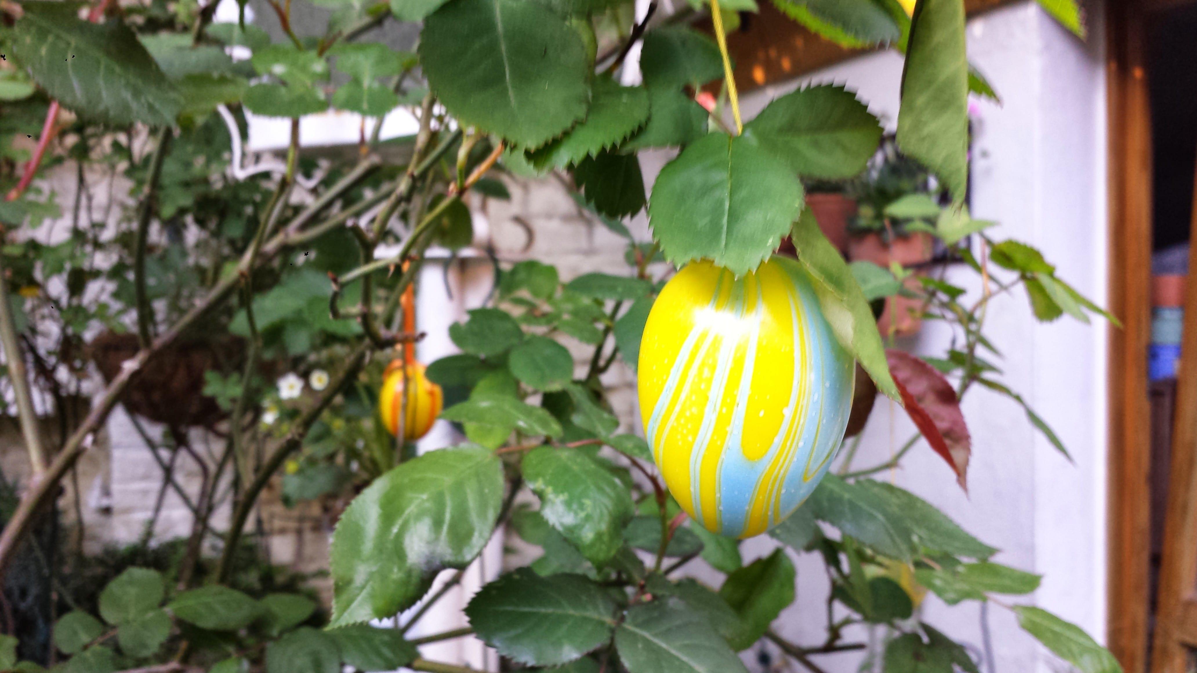Weder Henne, noch Ei – so viel steht jetzt fest
